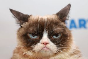 Internet's Famous Grumpy Cat Dies at Age 7